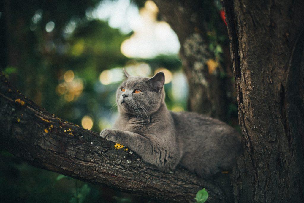 Zdjęcie kota siedzącego na drzewie