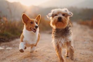 Zdjęcia psów – klika porad jak wykonywać niezwykłe fotografie, które wprowadzają widzów do psiego świata
