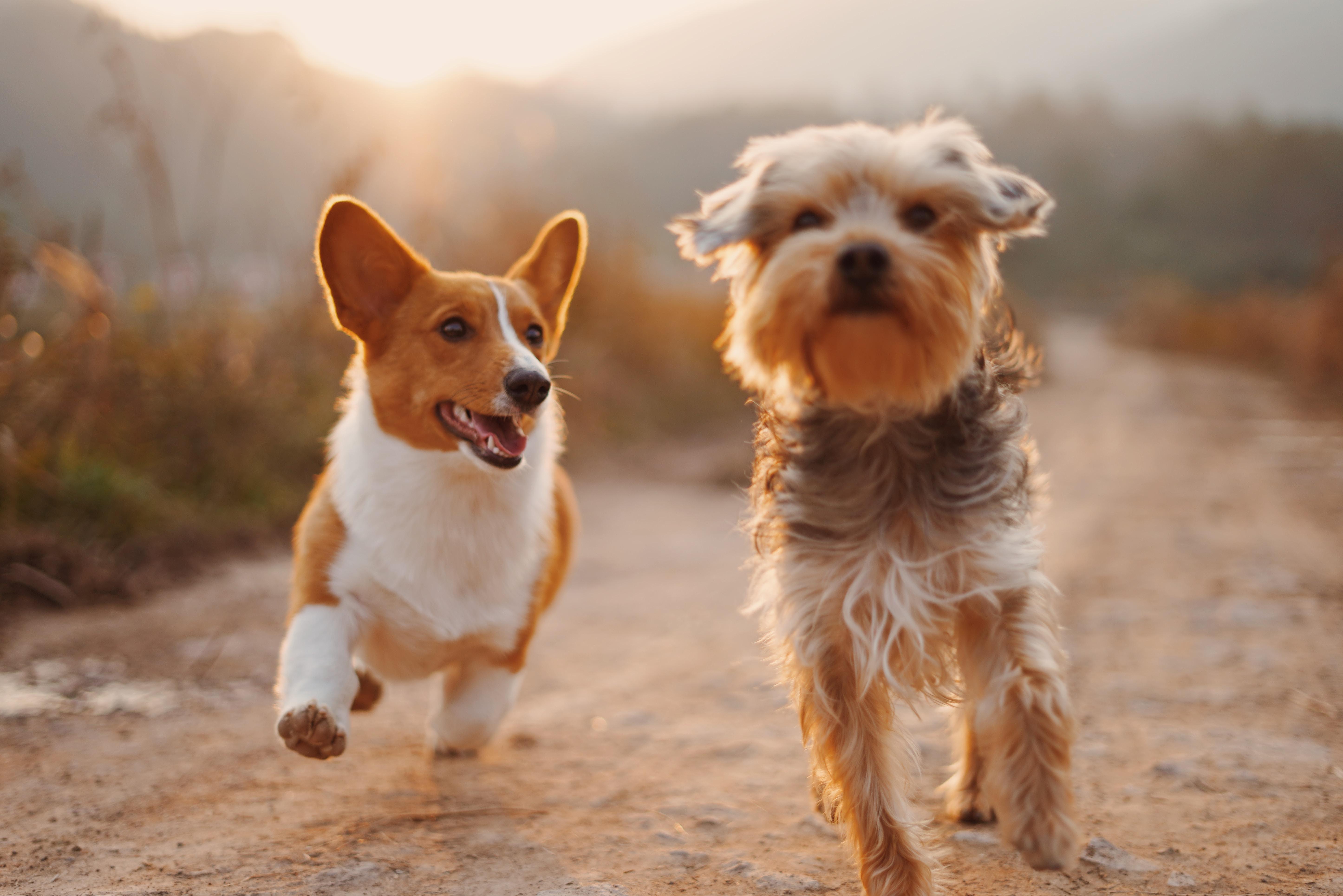 Zdjęcia psow