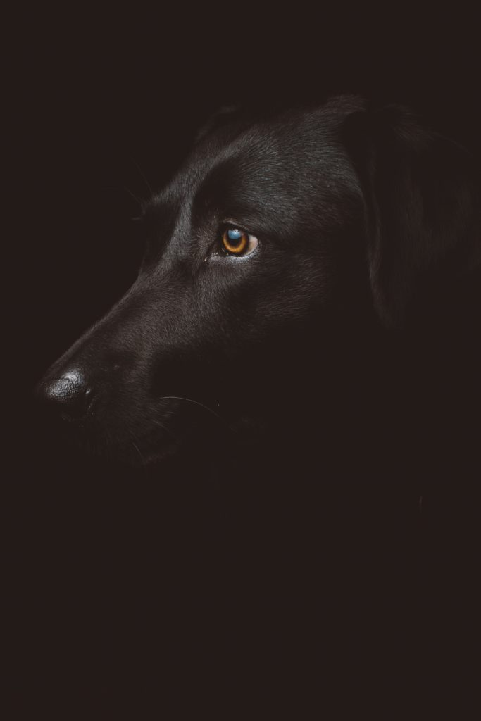 zdjęcia psów - korekta ekspozycji