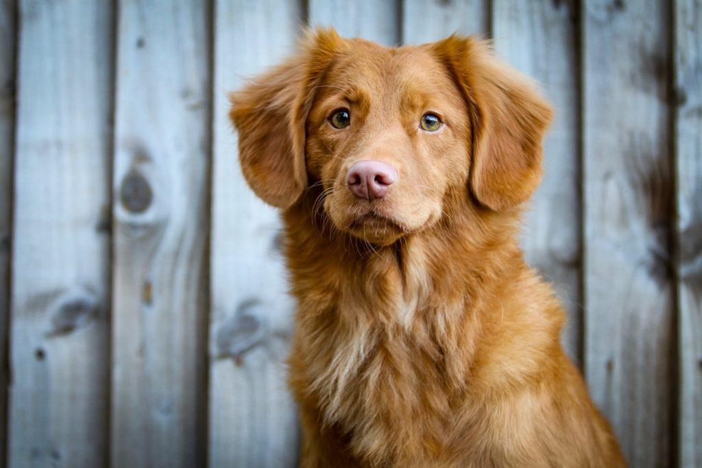Zdjęcia psów - portret