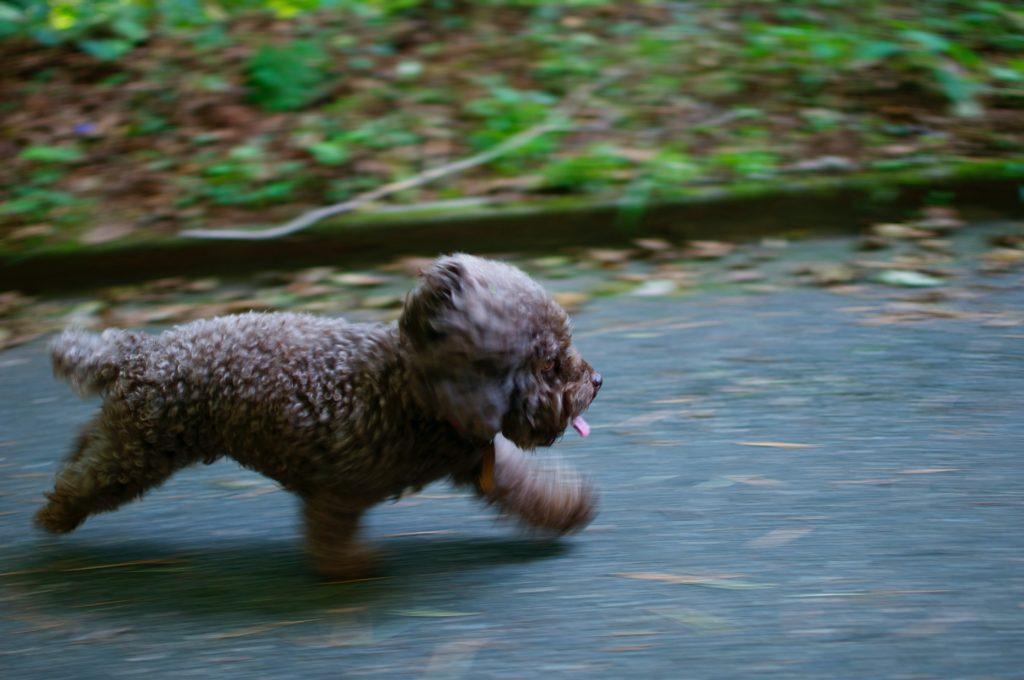 zdjęcia psów - ujęcie z długim czasem naświetlania