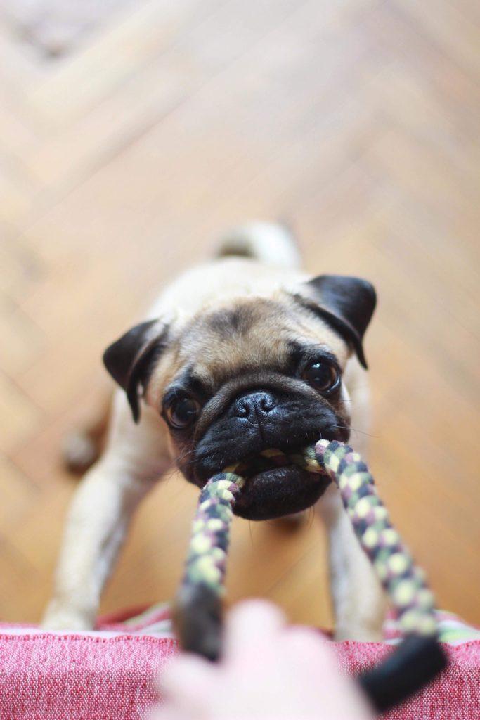 zdjęcia psów - ujęcie z bliska w stylu bokeh