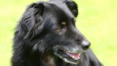 Jak zadbać o psa, gdy skończy 8 rok życia?