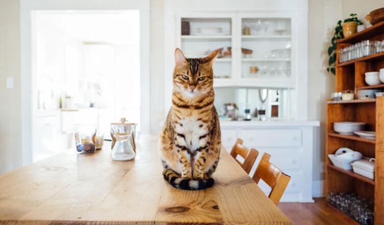 Żywienie kota