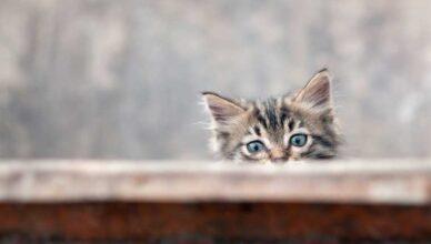 Co należy wziąć pod uwagę decydując się na kota