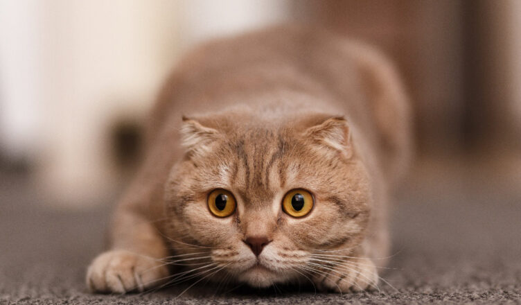 Instynktowne zachowania kota