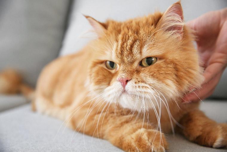 Instynktowne zachowania kotów