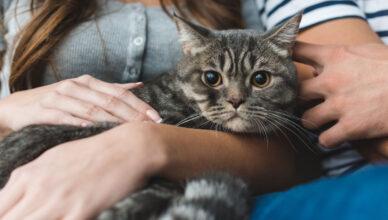 Jak nawiązać więź z kotem