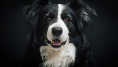 Czy istnieje najlepsza karma dla psa?