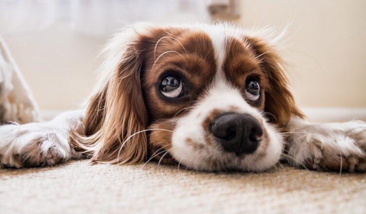 jakie imię wybrać dla psa