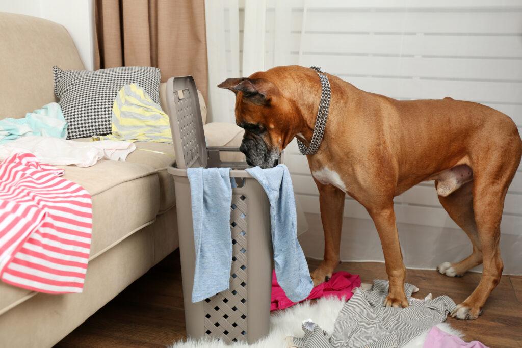 17 sposobów na zabawę z psem bez wychodzenia z domu