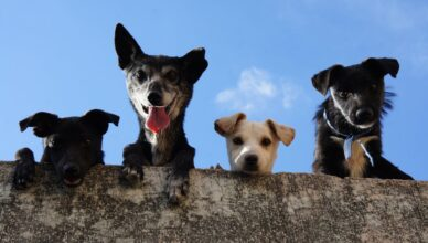 Najbardziej popularne rasy psów w filmach.