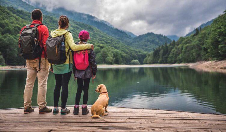 Pies w podrózy