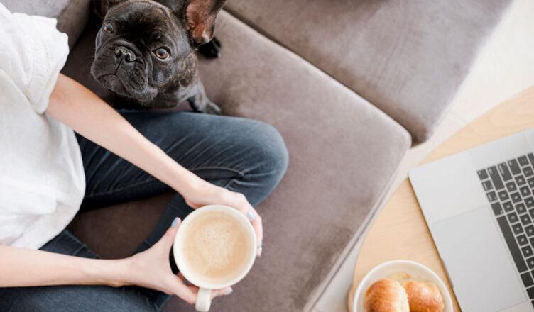 Farmina naturalna karma dla psa i kota