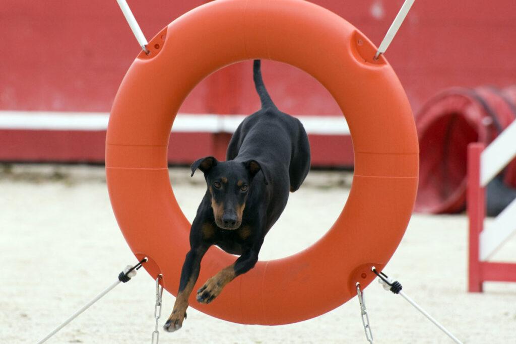 Pies w firmie