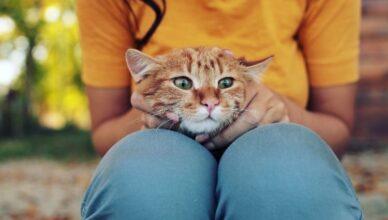 Jak zaopiekować się kotem po kastracji i sterylizacji?