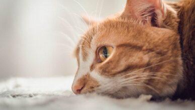 Jak często i na co szczepić kota?