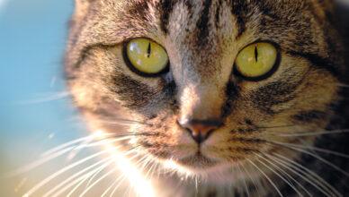 Co jest najważniejsze w żywieniu kotów