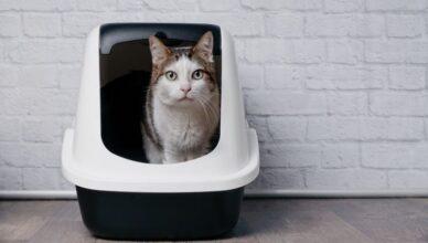 Dlaczego kot roznosi żwirek z kuwety? Jak sobie z tym faktem poradzić?