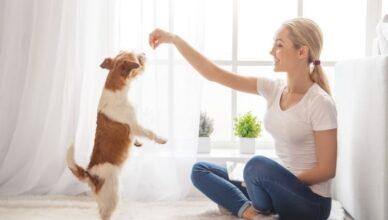 Ranking przysmaków dla psów 2021