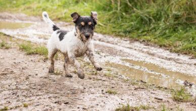Czy wiesz, że kleszcz u psa może pojawić się także w wiosenne dni?