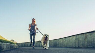 Jak zacząć biegać z psem?