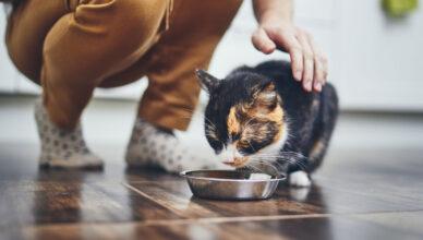 Karmy Fitmin dla kota. Sprawdź czemu warto spróbować