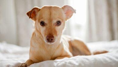 Jak nauczyć psa sikania na matę? Doradzamy!