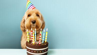 Jak się liczy wiek psa? Podpowiadamy!