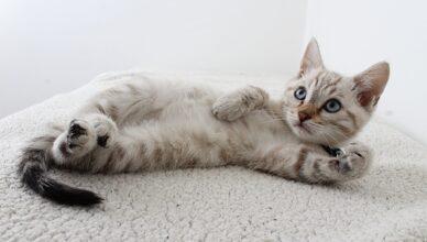 Kocięta – jak karmić? Najlepsze karmy dla małego kota